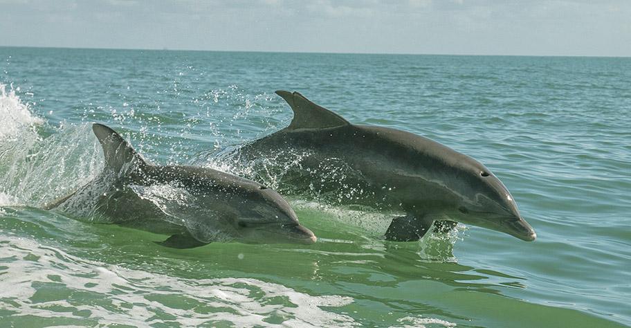 Malediven Delfine Familienferien