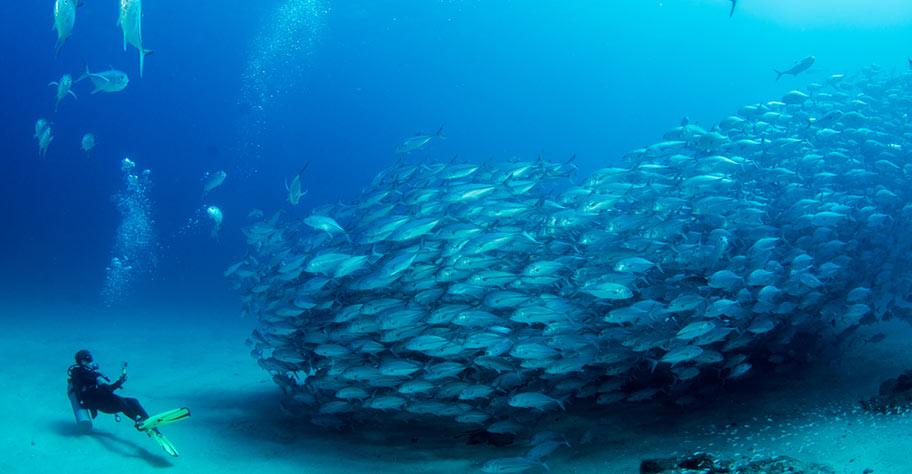 Malediven Tauchen Fischschwarm