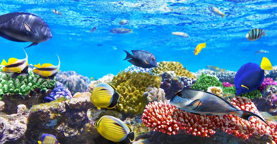Korallenriff Fische Malediven Tauchen